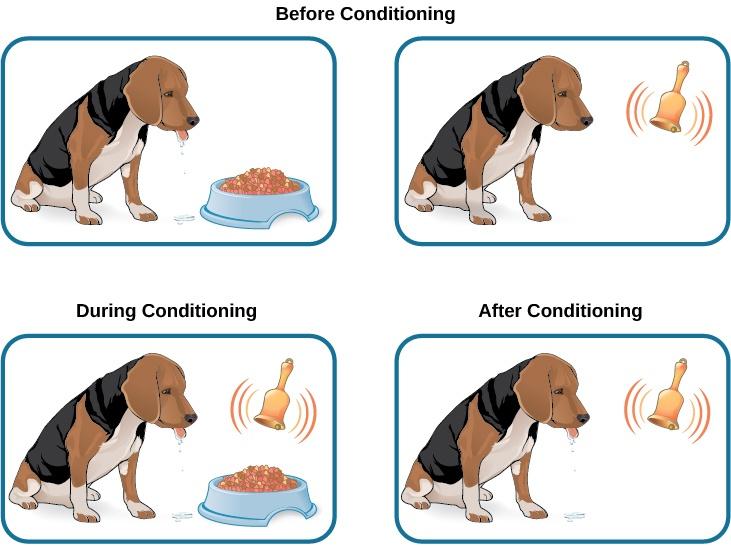 pavlov's dog classical conditioning